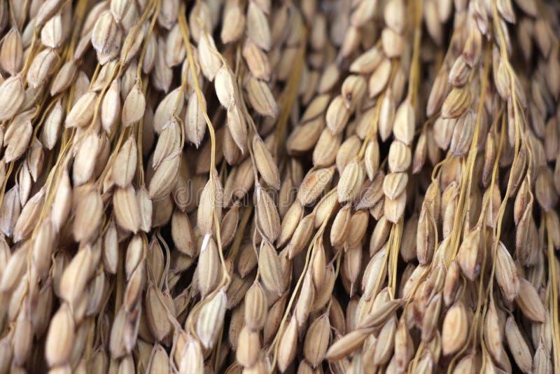 Bom arroz fotografia de stock