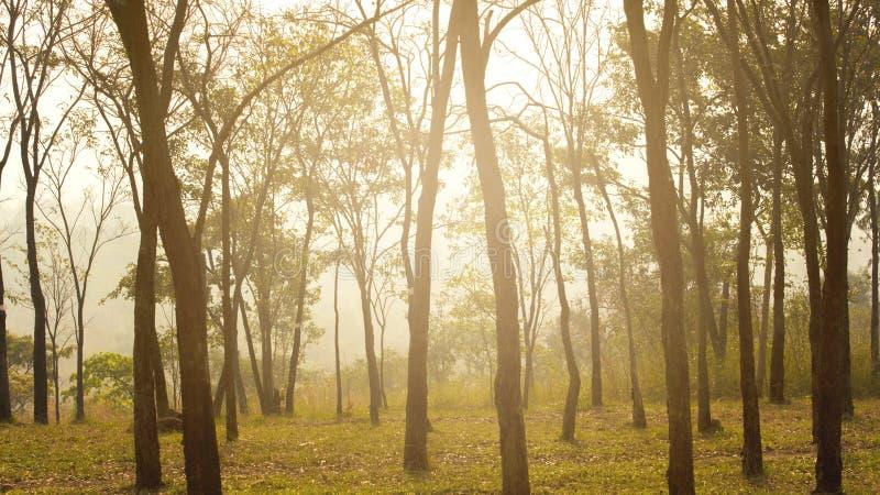 Bom dia com a floresta na mola brilhante fotografia de stock