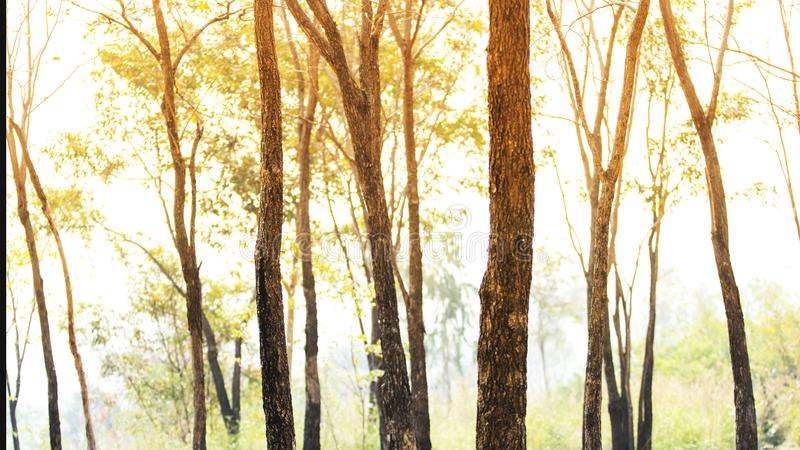 Bom dia com a floresta na mola brilhante imagem de stock