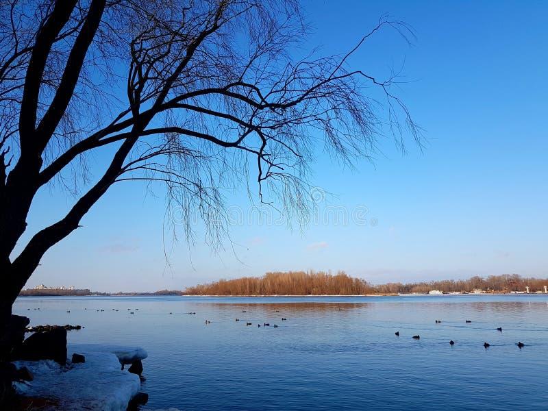 Bom dia de inverno ensolarado fotografia de stock