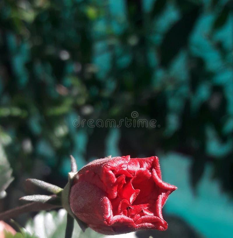 Bom olhar da flor bonita seu um PIC surpreendente imagem de stock