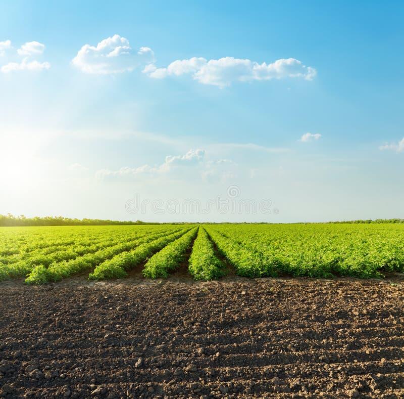 Bom por do sol com as nuvens sobre o campo agrícola com tomates fotos de stock royalty free