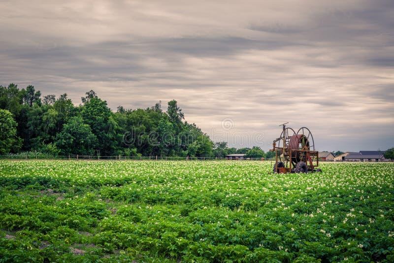 Bomba de agua vieja en un campo de la patata imagen de archivo libre de regalías