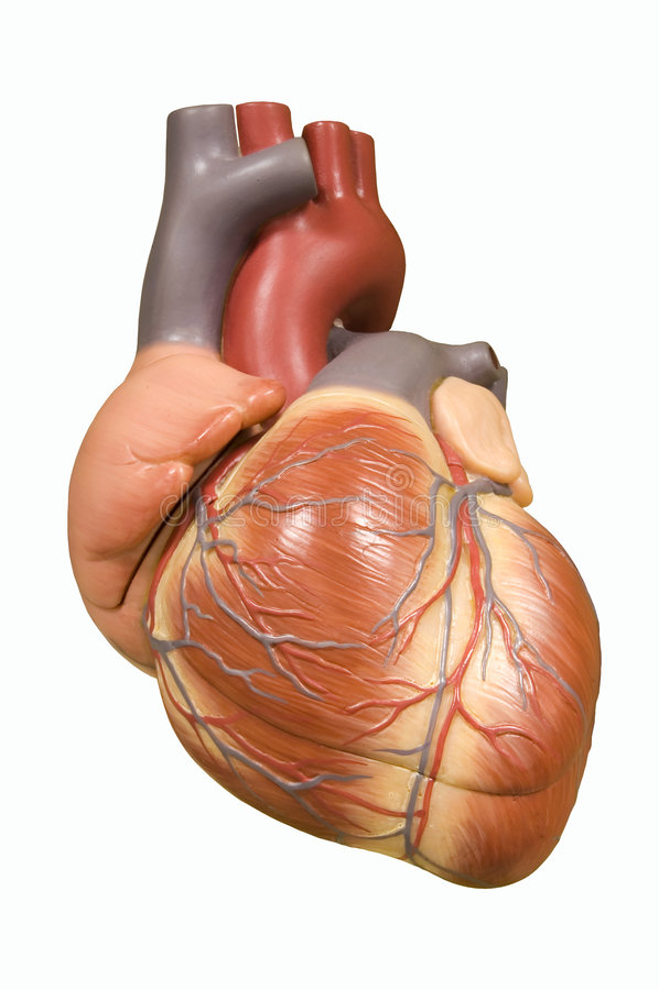 Bomba del corazón - con el camino de recortes foto de archivo libre de regalías