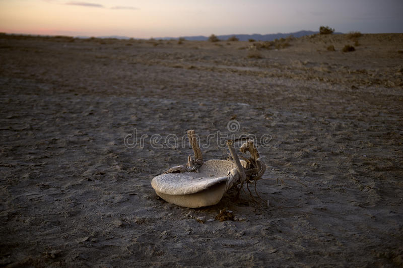 Bombay Beach Chair royalty free stock photography