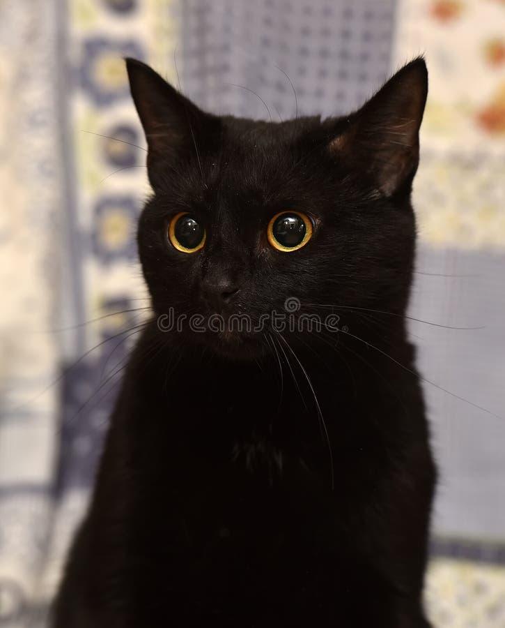 Bombay-Katze stockbilder