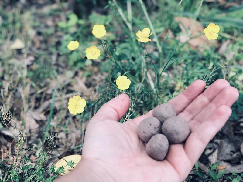 Bombe del seme del Wildflower fotografia stock libera da diritti