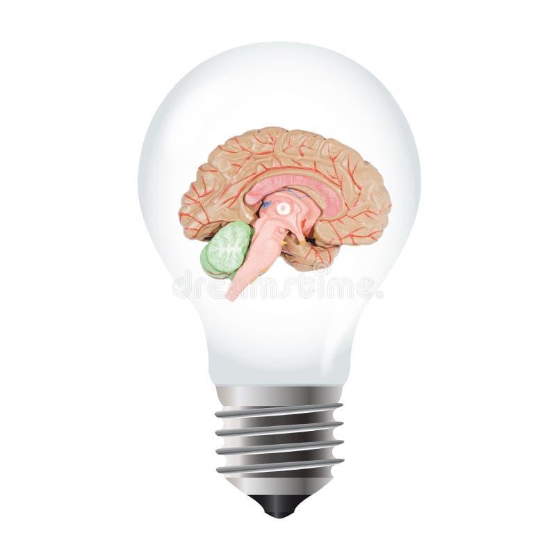 Bombilla con el cerebro ilustración del vector