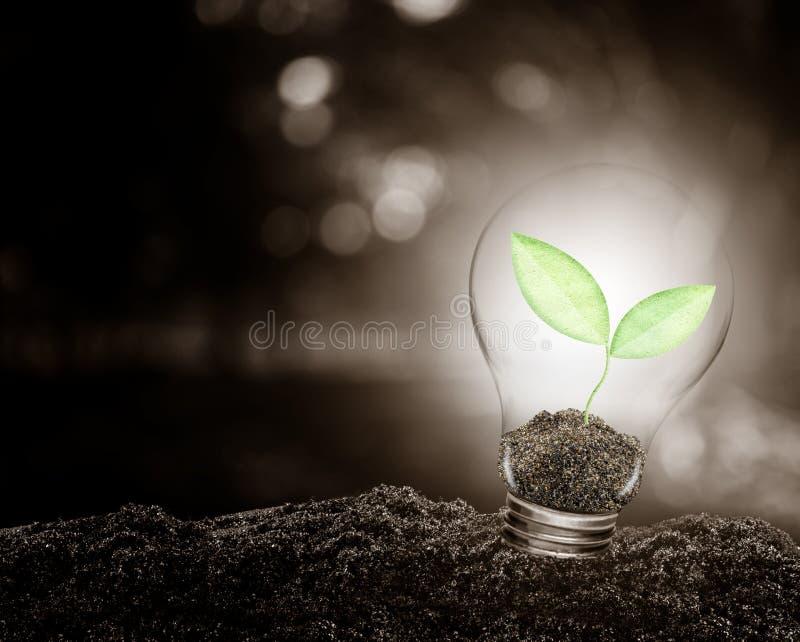 Bombilla con la planta que crece dentro en la ecología del suelo fotografía de archivo