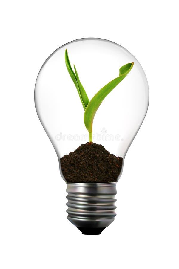 Bombilla con la planta verde adentro foto de archivo libre de regalías