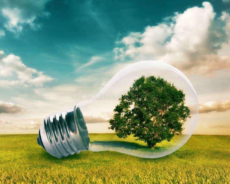 Bombilla con un árbol dentro imagen de archivo libre de regalías