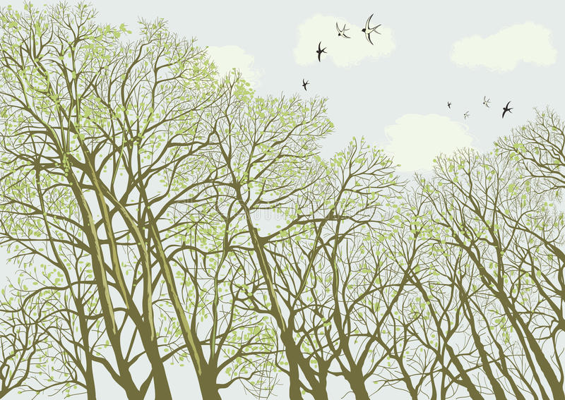 Bomen stock illustratie