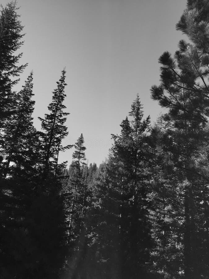 Bomen royalty-vrije stock afbeelding