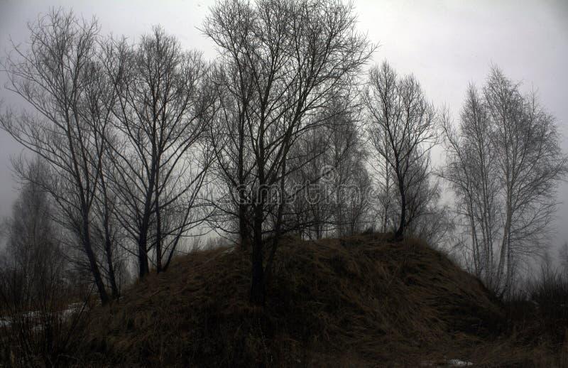 Bomen royalty-vrije stock foto's