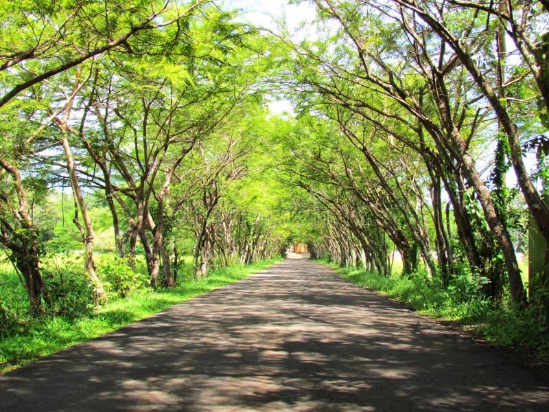 Bomen aan beide kanten van de wegkromming samen stock afbeeldingen