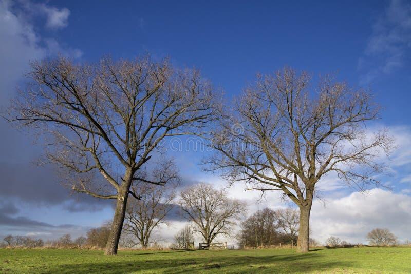 Bomen in alluviaal gebied royalty-vrije stock fotografie