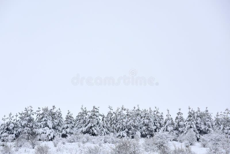 Bomen behandelde sneeuw Kerstbomen met witte sneeuw worden behandeld die Emp stock foto's