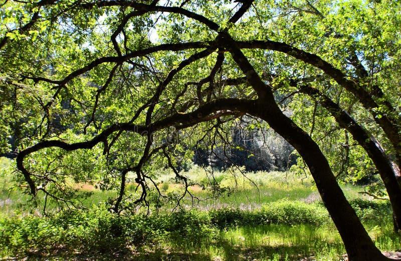 Bomen bij de Open plek royalty-vrije stock afbeelding