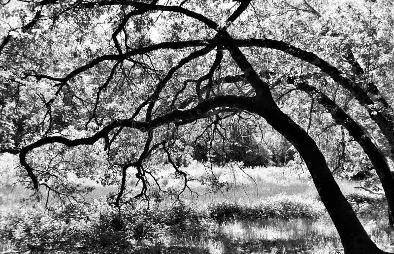 Bomen bij de Open plek royalty-vrije stock afbeeldingen