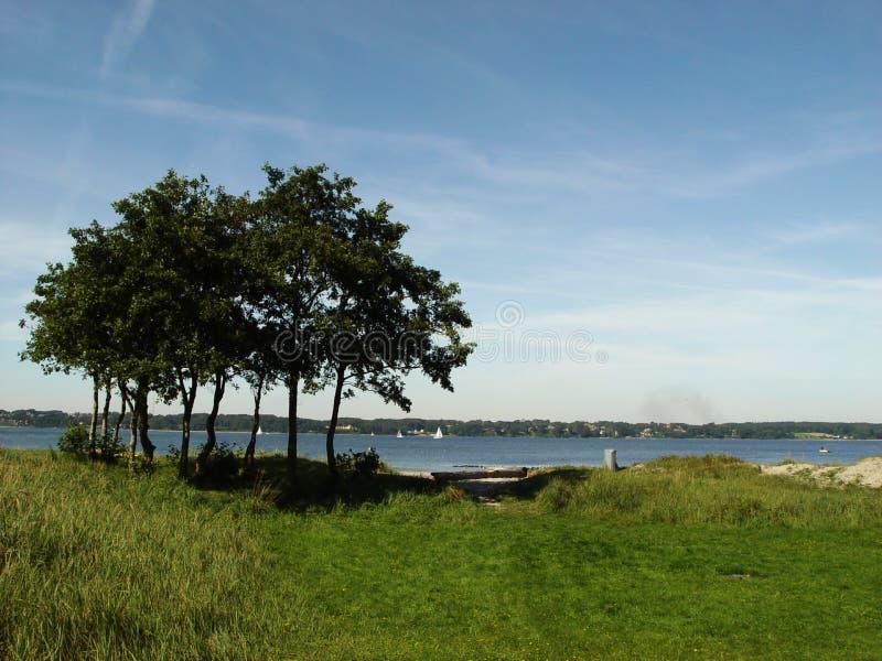 bomen bij fjord royalty-vrije stock foto's