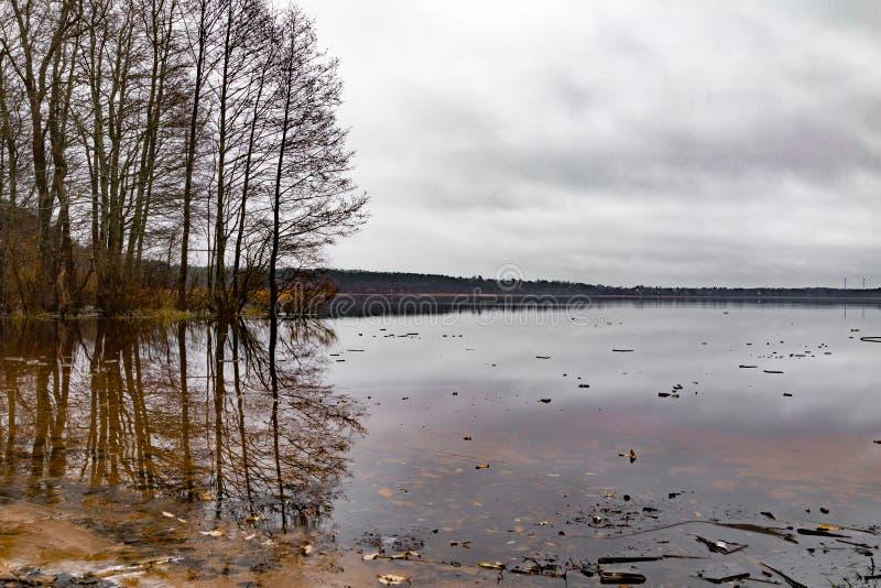 Bomen bij het meer royalty-vrije stock afbeelding