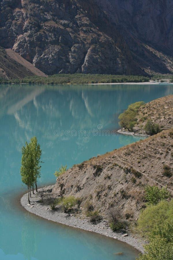 Bomen bij het meer stock afbeelding