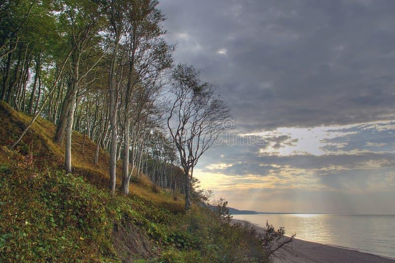 Bomen bij het overzees, zonsondergang. royalty-vrije stock fotografie
