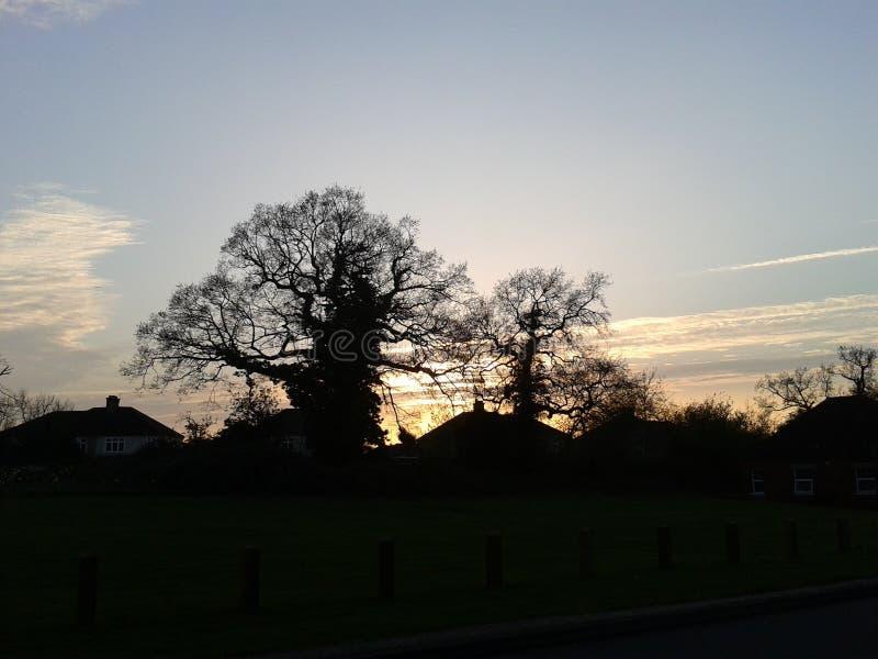 Bomen bij Zonsondergang worden geschetst die royalty-vrije stock foto's