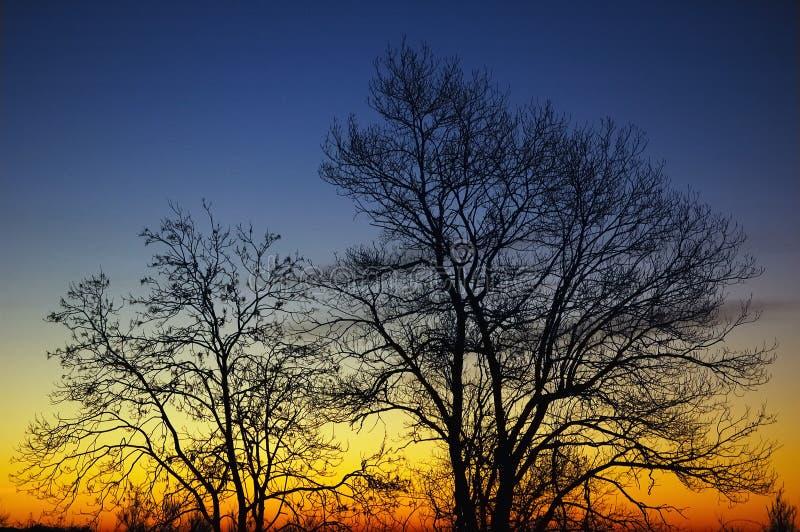 Bomen bij zonsopgang royalty-vrije stock fotografie