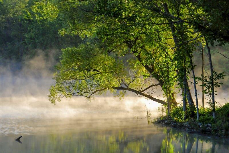 Bomen bij zonsopgang met mist op meer stock foto