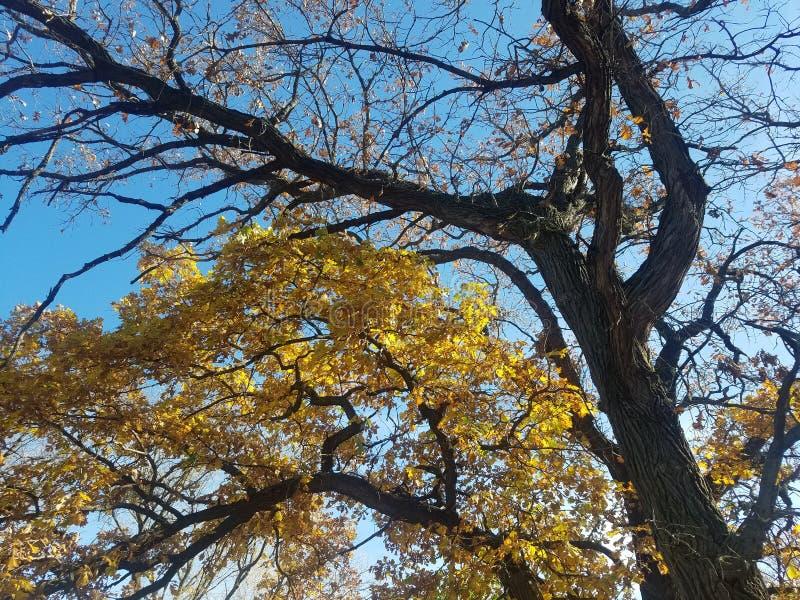 Bomen & bladeren royalty-vrije stock fotografie