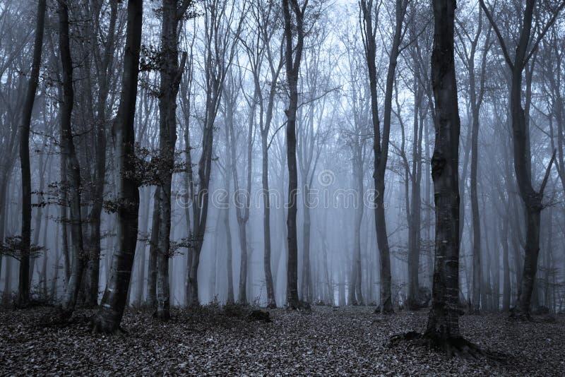 Bomen in blauw mist Griezelig bos royalty-vrije stock fotografie