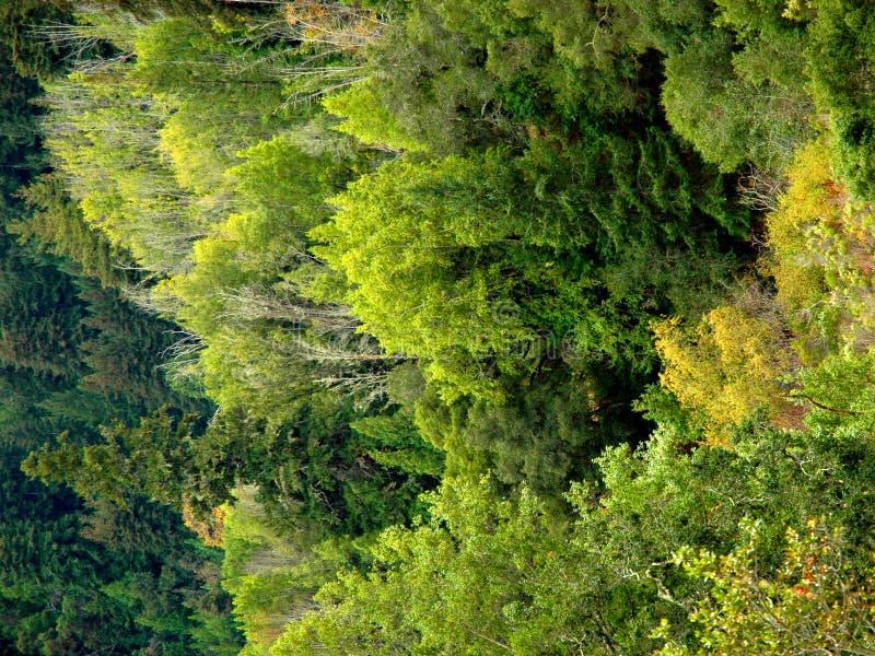 Bomen, bomen, bomen! royalty-vrije stock afbeelding