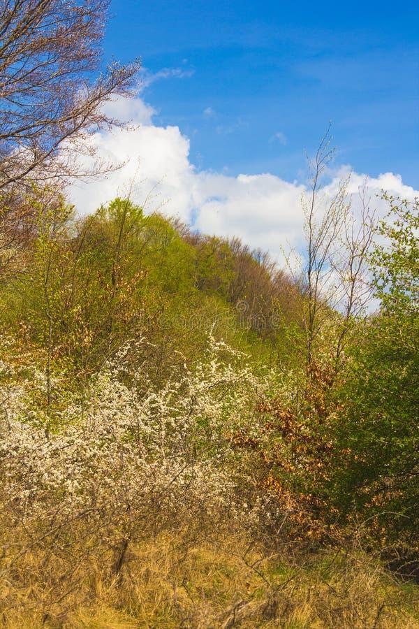 Bomen in bos in de lente royalty-vrije stock fotografie