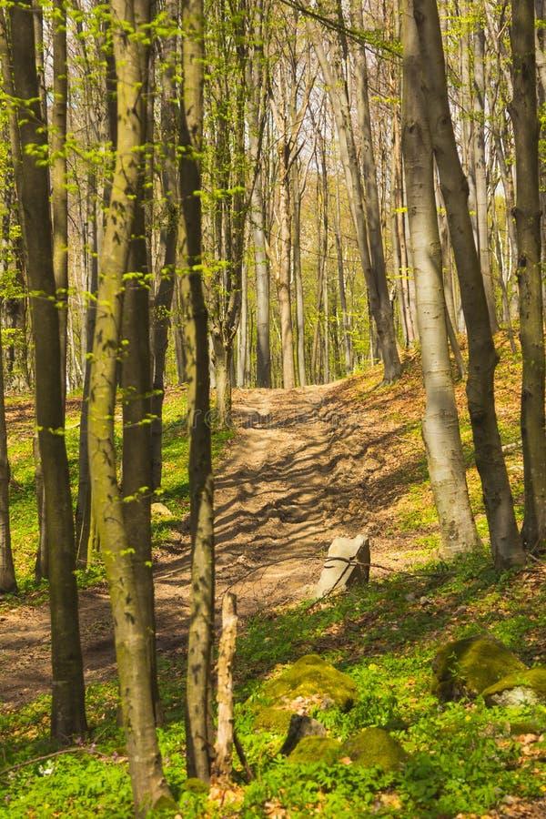 Bomen in bos in de lente royalty-vrije stock afbeeldingen