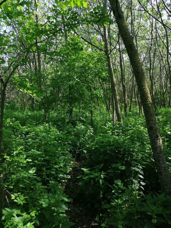 Bomen in bos in het midden van de weg stock foto