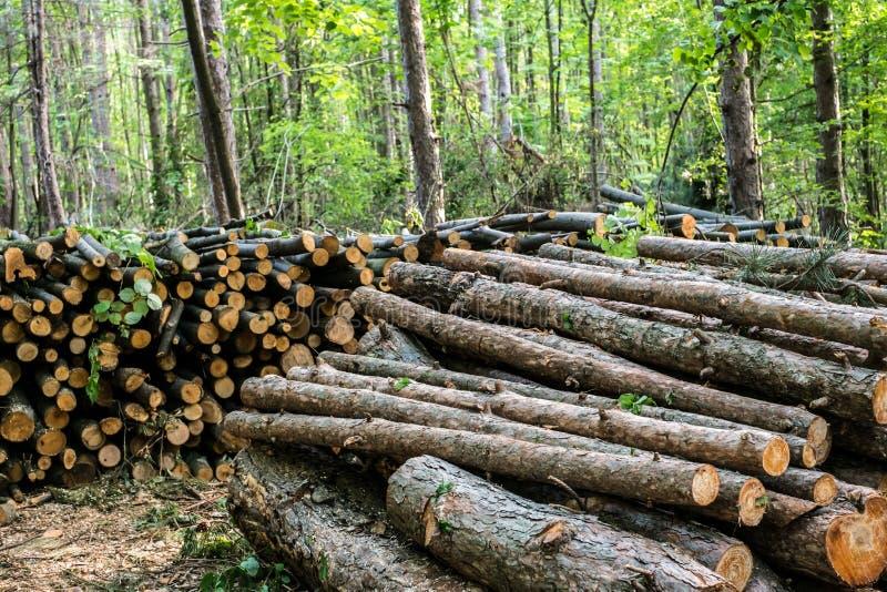 Bomen in bos worden en worden gestapeld gesneden dat stock fotografie