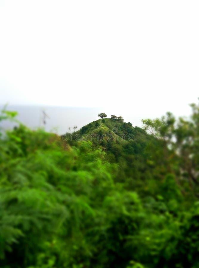 Bomen bovenop de heuvel royalty-vrije stock afbeelding
