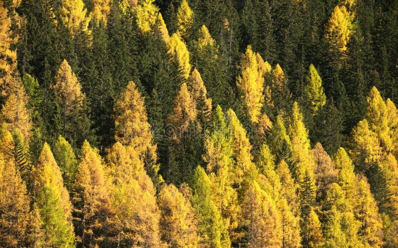 Bomen in Dalingskleuren royalty-vrije stock afbeelding
