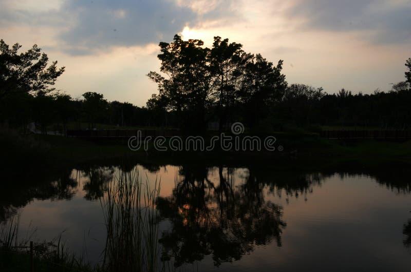 Bomen in dark met zijn schaduw in het meer stock foto