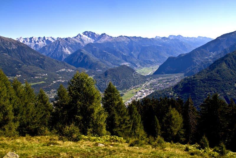 Bomen in de bergen stock foto