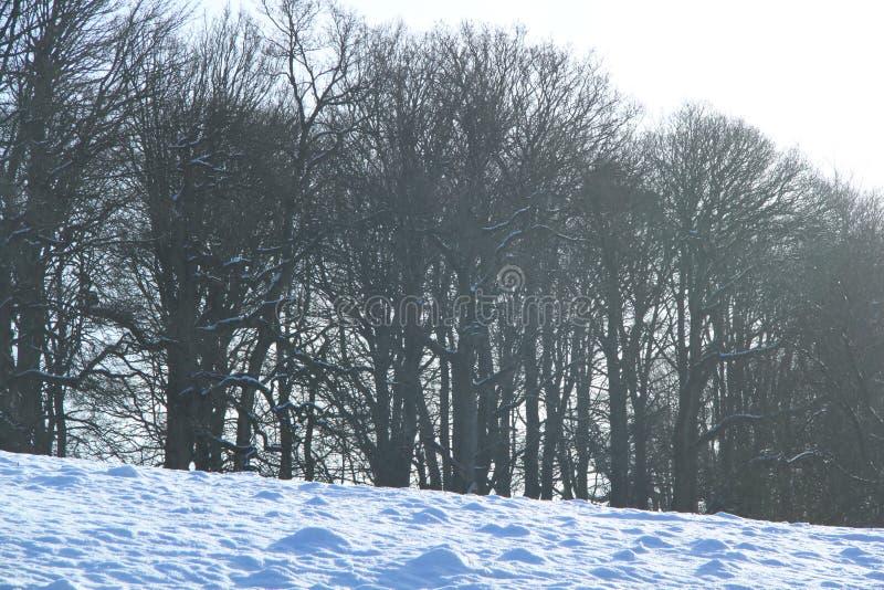 Bomen in de de wintersneeuw bij Levens-Park, Cumbria royalty-vrije stock fotografie