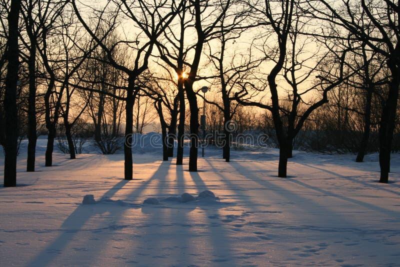 Bomen in de de winterzon met schaduw royalty-vrije stock fotografie