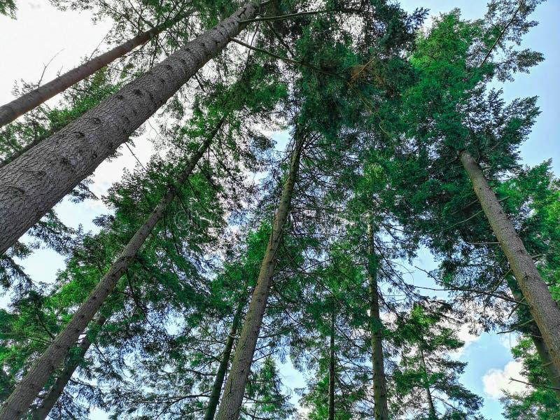 Bomen in de hemel stock foto's