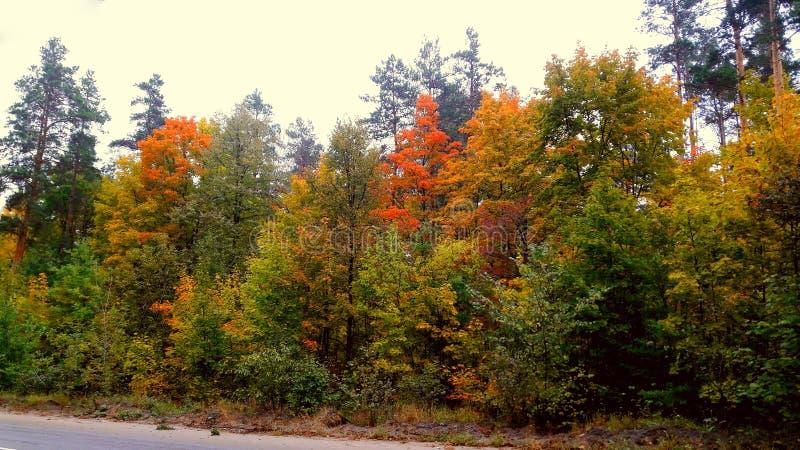 bomen in de herfst met gele, rode, en groene bladeren royalty-vrije stock fotografie