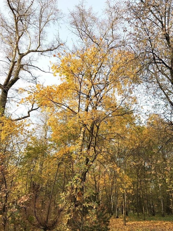Bomen in de herfstbos stock afbeelding
