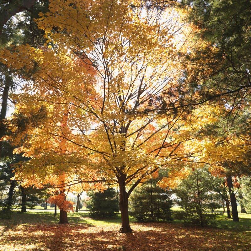 Bomen in de kleur van de Daling stock foto's