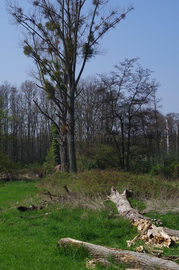 Bomen in de Lente dichtbij Burgau-Kasteel, Duitsland royalty-vrije stock foto's