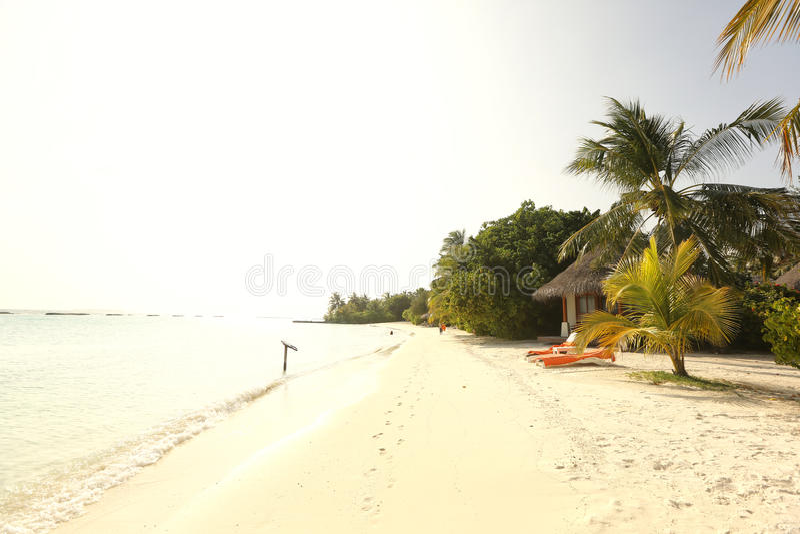 Bomen in de Maldiven dichtbij zonnig strandzand stock afbeelding