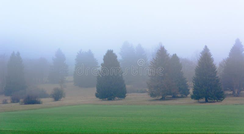 Bomen in de mist stock afbeeldingen